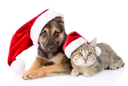 Cute shepherd puppy with Christmas cat - Dogs in pictures