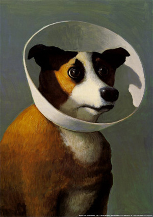 Dog With Cone on Head, Film Hound