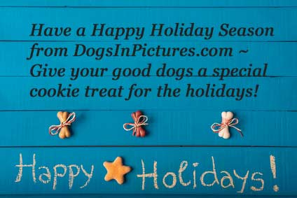 Happy Holidays! Merry Christmas and Happy New Year from DogsInPictures.com
