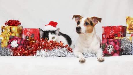 Kitty and Jack Russell terrier sit among Christmas gifts