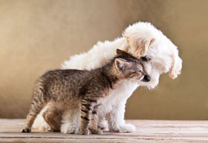 White Puppy with Tabby Kitten