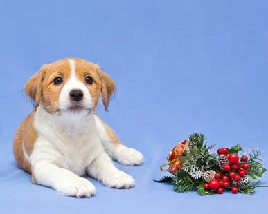 Adorable holiday puppy dog with winter decorations