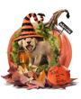 Halloween dog clip art, puppy dog and pumpkin