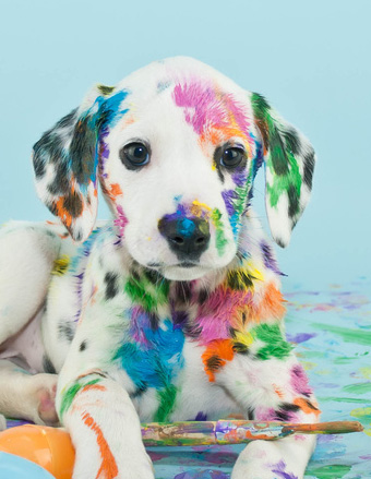 Colorful cute Dalmatian puppy dog, Easter egg style