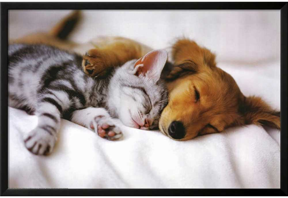 Red Brown Puppy and Tabby Kitten Poster