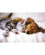 Puppy and kitten sleeping together