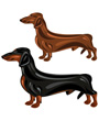 Clip art of two Dachshund dogs in show poses
