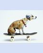 Dog with Helmet Skateboarding