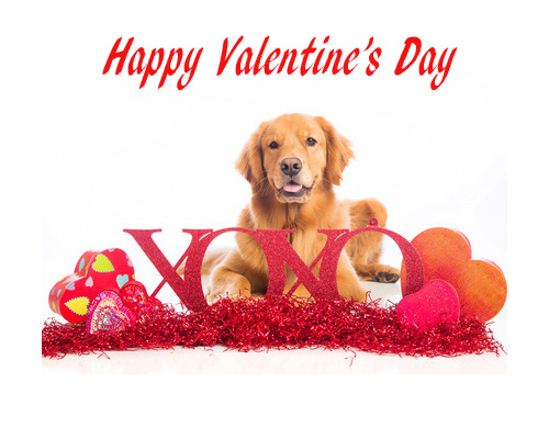 Golden Retriever Valentines Day dog, kisses, hugs and hearts, Love Dogs