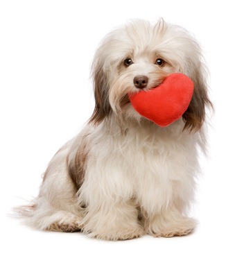 pictures of dogs for valentines day - dog pictures, Ideas