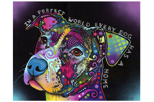 Colorful pit bull terrier art print, In a perfect world every dog has a home, Dean Russo
