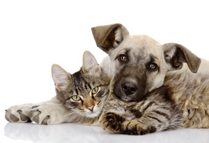 Cute Tan Puppy and Tabby Kitten Picture