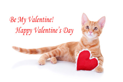 Orange tabby cat with Valentine heart