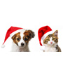 Cute puppy and kitten sit together wearing Santa hats