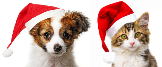 picture of puppy kitten in santa hats dog photography