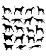 Silhouettes standing running dogs