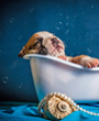 Tiny puppy sleeps in tiny bath tub